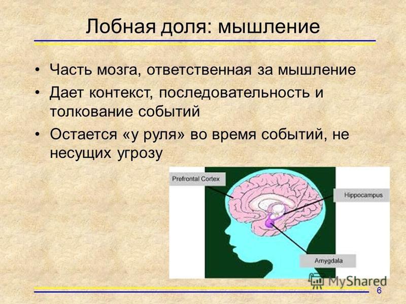 Лобная доля: мышление Часть мозга, ответственная за мышление Дает контекст, последовательность и толкование событий Остается «у руля» во время событий, не несущих угрозу 6