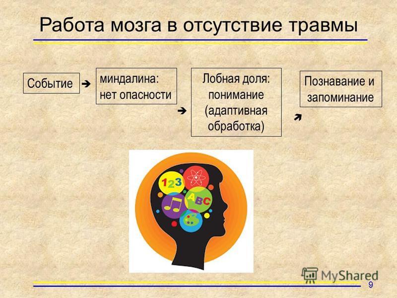 Работа мозга в отсутствие травмы Событие миндалина: нет опасности Лобная доля: понимание (адаптивная обработка) Познавание и запоминание 9