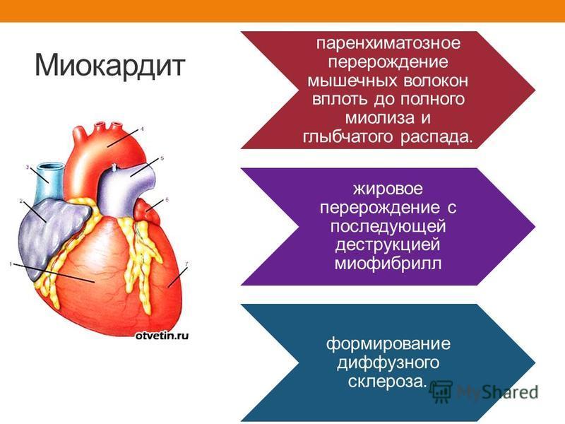 Экзотоксин Интоксикация Острая сердечно – сосудистая недостаточность Миокардит Полиневрит Нефротический синдром Симпато – адреналовая система Кровь, лимфа