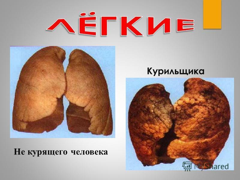 Не курящего человека Курильщика