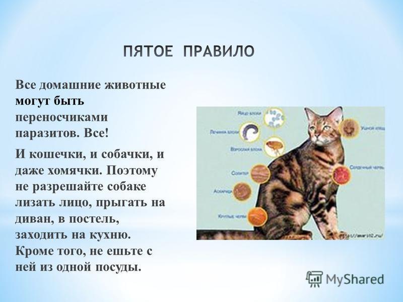 Все домашние животные могут быть переносчиками паразитов. Все! И кошечки, и собачки, и даже хомячки. Поэтому не разрешайте собаке лизать лицо, прыгать на диван, в постель, заходить на кухню. Кроме того, не ешьте с ней из одной посуды.