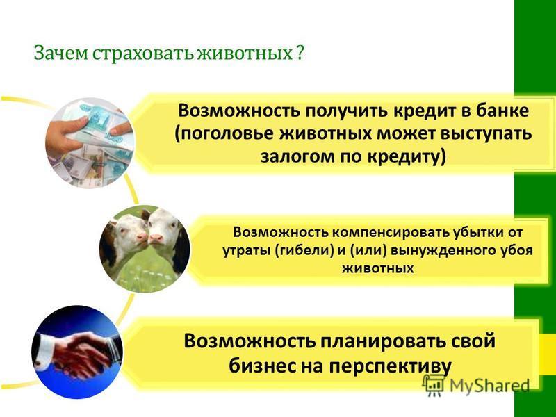 Зачем страховать животных ? Возможность получить кредит в банке (поголовье животных может выступать залогом по кредиту) Возможность компенсировать убытки от утраты (гибели) и (или) вынужденного убоя животных Возможность планировать свой бизнес на пер