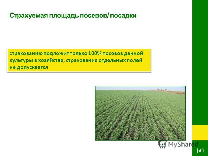 Страхуемая площадь посевов/ посадки 4 страхованию подлежит только 100% посевов данной культуры в хозяйстве, страхование отдельных полей не допускается