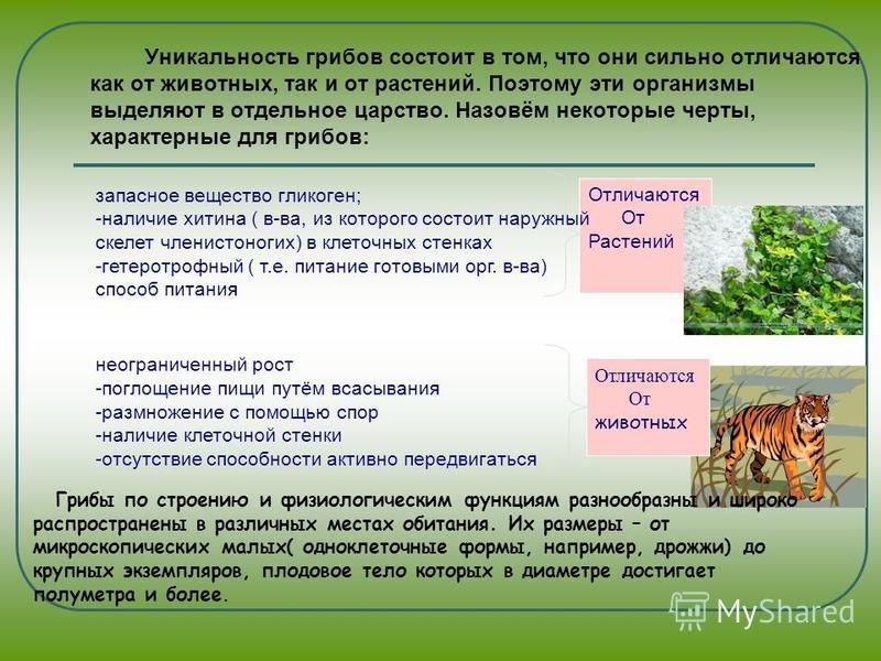 чем отличаются грибы сапротрофы от паразитов