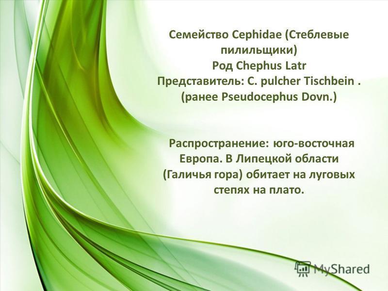 Семейство Сephidae (Стеблевые пилильщики) Род Chephus Latr Представитель: C. pulcher Tischbein. (ранее Pseudocephus Dovn.) Распространение: юго-восточная Европа. В Липецкой области (Галичья гора) обитает на луговых степях на плато.