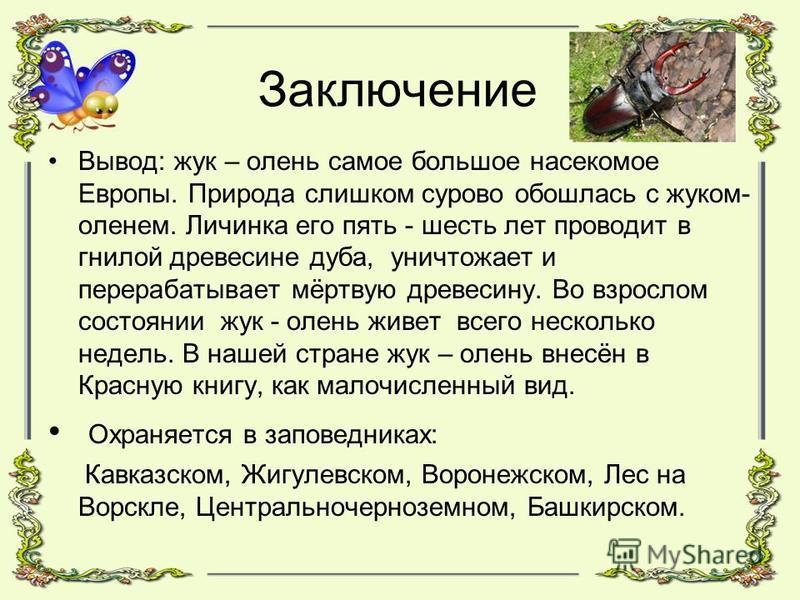 Заключение Вывод: жук – олень самое большое насекомое Европы. Природа слишком сурово обошлась с жуком- оленем. Личинка его пять - шесть лет проводит в гнилой древесине дуба, уничтожает и перерабатывает мёртвую древесину. Во взрослом состоянии жук - о
