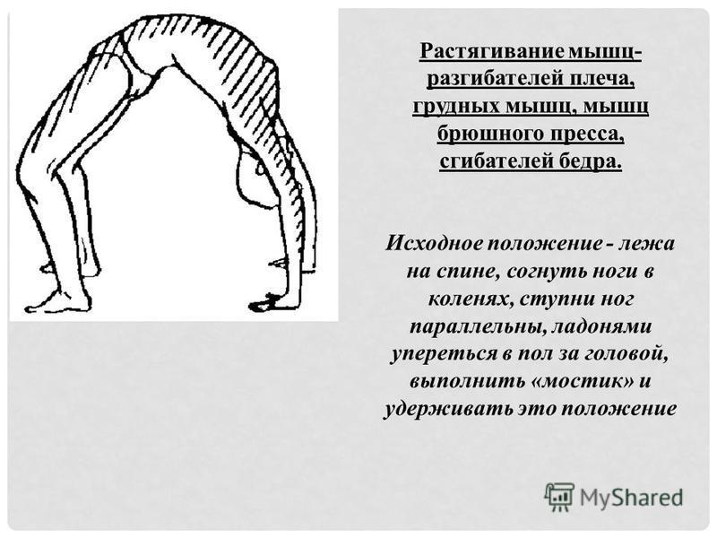 Растягивание мышц- разгибателей плеча, грудных мышц, мышц брюшного пресса, сгибателей бедра. Исходное положение - лежа на спине, согнуть ноги в коленях, ступни ног параллельны, ладонями упереться в пол за головой, выполнить «мостик» и удерживать это