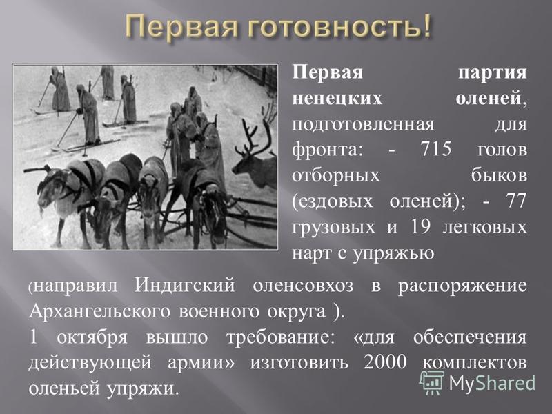 Первая партия ненецких оленей, подготовленная для фронта : - 715 голов отборных быков ( ездовых оленей ); - 77 грузовых и 19 легковых нарт с упряжью ( направил Индигский оленсовхоз в распоряжение Архангельского военного округа ). 1 октября вышло треб