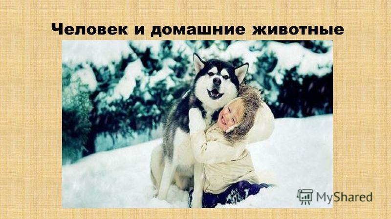 Человек и домашние животные