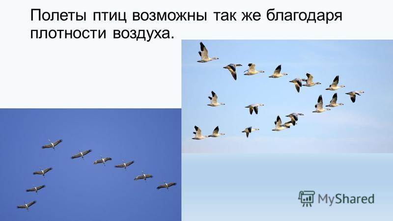 Полеты птиц возможны так же благодаря плотности воздуха.