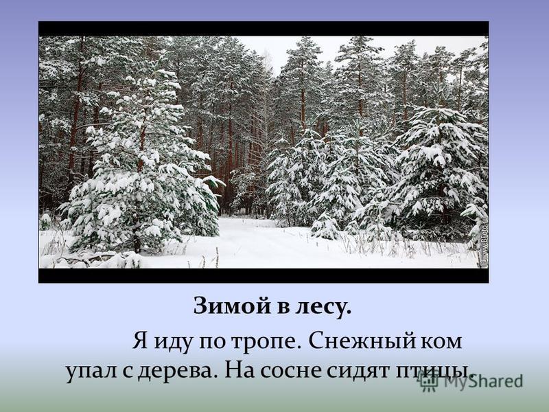 Зимой в лесу. Я иду по тропе. Снежный ком упал с дерева. На сосне сидят птицы.