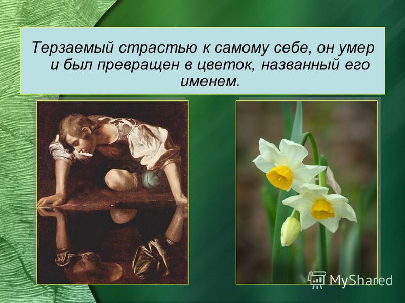 Терзаемый страстью к самому себе, он умер и был превращен в цветок, названный его именем.