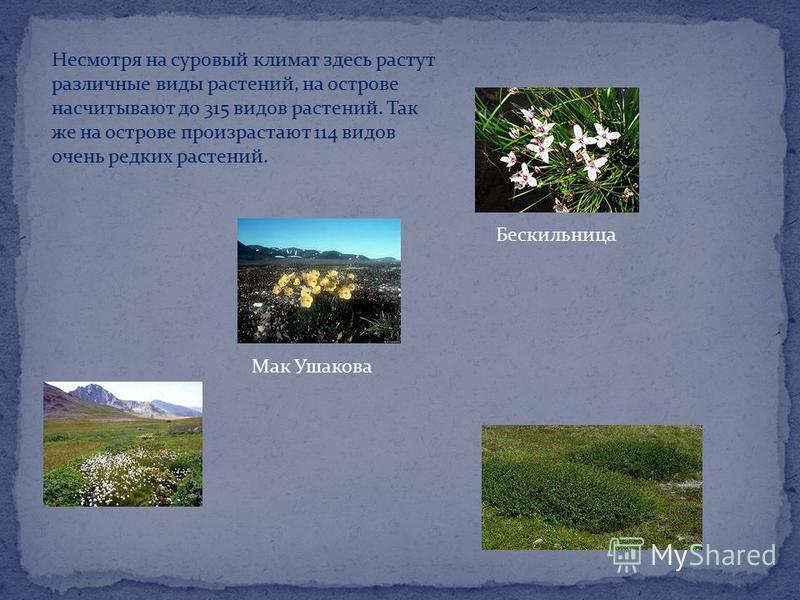 Несмотря на суровый климат здесь растут различные виды растений, на острове насчитывают до 315 видов растений. Так же на острове произрастают 114 видов очень редких растений. Бескильница Мак Ушакова