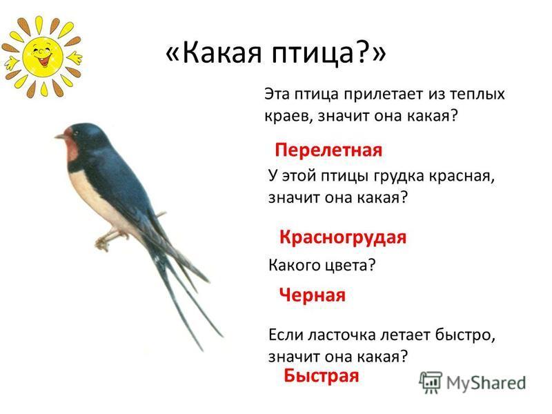 «Какая птица?» Эта птица прилетает из теплых краев, значит она какая? Перелетная У этой птицы грудка красная, значит она какая? Красногрудая Какого цвета? Черная Если ласточка летает быстро, значит она какая? Быстрая