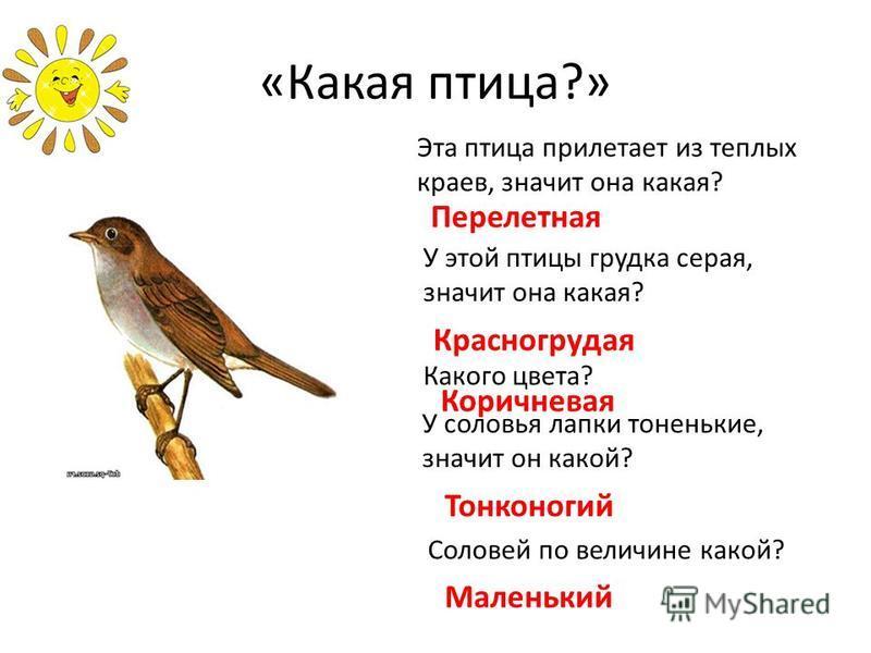 «Какая птица?» Эта птица прилетает из теплых краев, значит она какая? Перелетная У этой птицы грудка серая, значит она какая? Красногрудая Какого цвета? Коричневая У соловья лапки тоненькие, значит он какой? Тонконогий Соловей по величине какой? Мале
