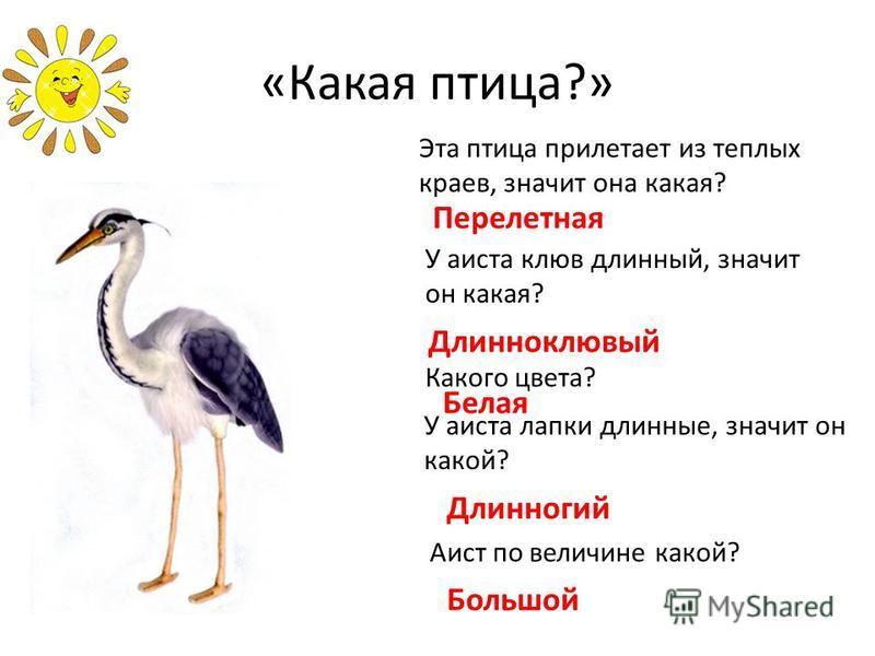 «Какая птица?» Эта птица прилетает из теплых краев, значит она какая? Перелетная У аиста клюв длинный, значит он какая? Длинноклювый Какого цвета? Белая У аиста лапки длинные, значит он какой? Длинногий Аист по величине какой? Большой