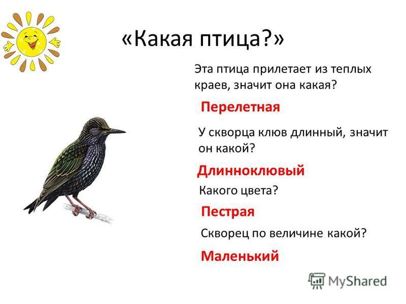 «Какая птица?» Эта птица прилетает из теплых краев, значит она какая? Перелетная У скворца клюв длинный, значит он какой? Длинноклювый Какого цвета? Пестрая Скворец по величине какой? Маленький