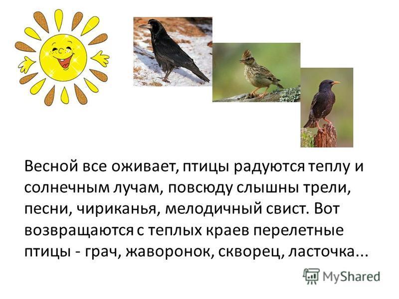 Весной все оживает, птицы радуются теплу и солнечным лучам, повсюду слышны трели, песни, чириканья, мелодичный свист. Вот возвращаются с теплых краев перелетные птицы - грач, жаворонок, скворец, ласточка...