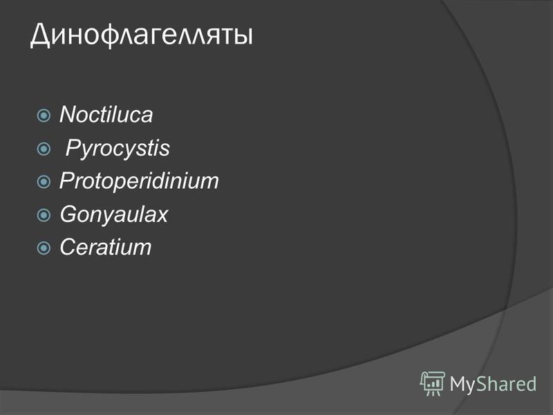 Динофлагелляты Noctiluca Pyrocystis Protoperidinium Gonyaulax Ceratium