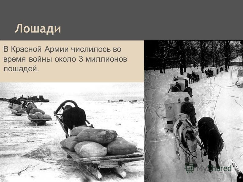 Лошади В Красной Армии числилось во время войны около 3 миллионов лошадей.