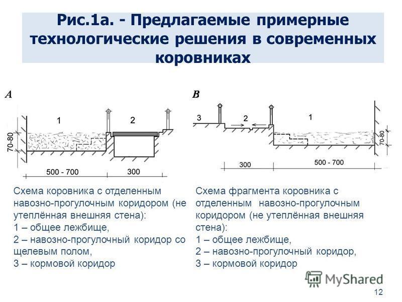 Рис.1 а. - Предлагаемые примерные технологические решения в современных коровниках 12 Схема коровника с отделенным навозно-прогулочным коридором (не утеплённая внешняя стена): 1 – общее лежбище, 2 – навозно-прогулочный коридор со щелевым полом, 3 – к