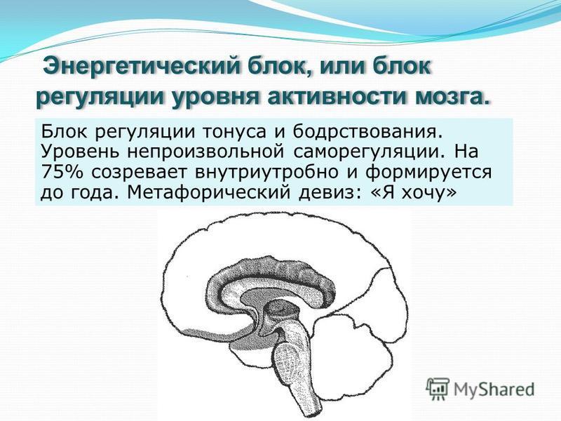 Энергетический блок, или блок регуляции уровня активности мозга. Блок регуляции тонуса и бодрствования. Уровень непроизвольной саморегуляции. На 75% созревает внутриутробно и формируется до года. Метафорический девиз: «Я хочу»