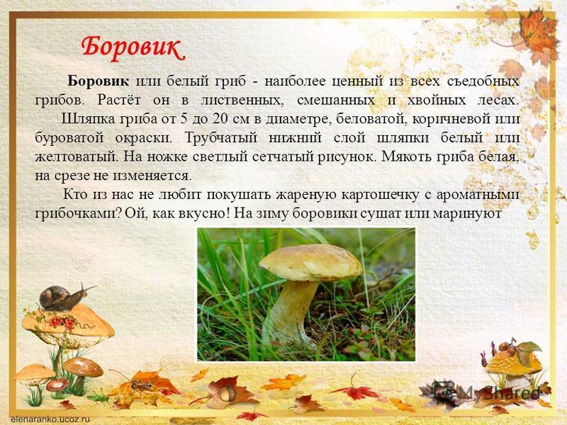 Боровик Боровик или белый гриб - наиболее ценный из всех съедобных грибов. Растёт он в лиственных, смешанных и хвойных лесах. Шляпка гриба от 5 до 20 см в диаметре, беловатой, коричневой или буроватой окраски. Трубчатый нижний слой шляпки белый или ж