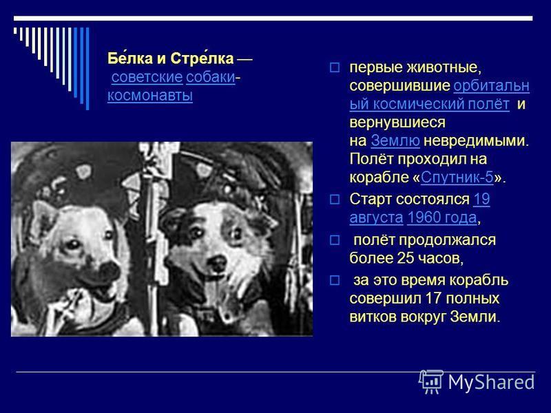 первые животные, совершившие орбитальный космический полёт и вернувшиеся на Землю невредимыми. Полёт проходил на корабле «Спутник-5».орбитальный космический полёт ЗемлюСпутник-5 Старт состоялся 19 августа 1960 года,19 августа 1960 года полёт продолжа