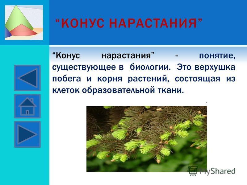 КОНУС НАРАСТАНИЯ Конус нарастания - понятие, существующее в биологии. Это верхушка побега и корня растений, состоящая из клеток образовательной ткани.