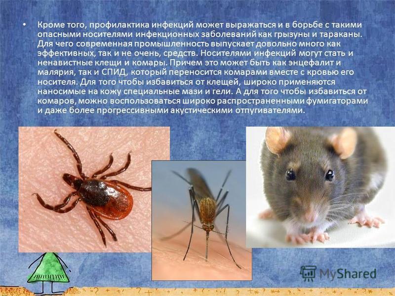 Кроме того, профилактика инфекций может выражаться и в борьбе с такими опасными носителями инфекционных заболеваний как грызуны и тараканы. Для чего современная промышленность выпускает довольно много как эффективных, так и не очень, средств. Носител