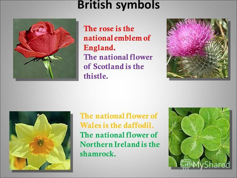 British symbols The rose is the national emblem of England. The national flower of Scotland is the thistle. The national flower of Wales is the daffodil. The national flower of Northern Ireland is the shamrock.