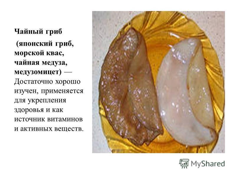 Кефирный гриб (тибетский гриб, молочный гриб, гриб индийских йогов) так же является кладезем полезных веществ.