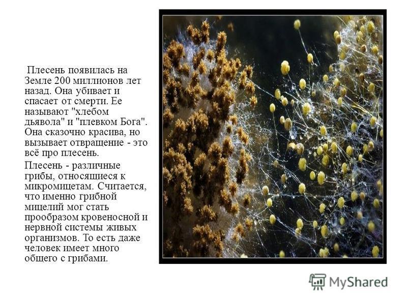 Потом выяснилось, что в лёгких найденных мумий жил плесневый грибок, один из самых опасных его видов.
