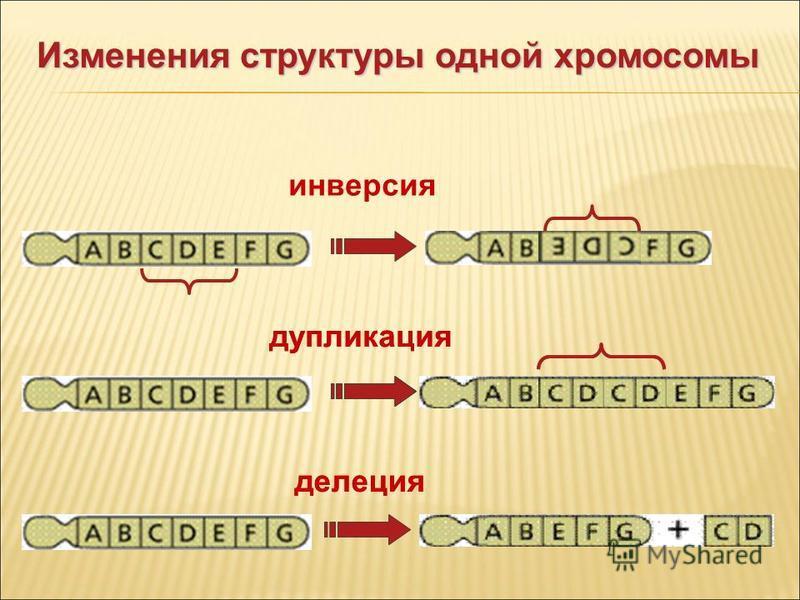 инверсия дупликация делеция Изменения структуры одной хромосомы дупликация делеция