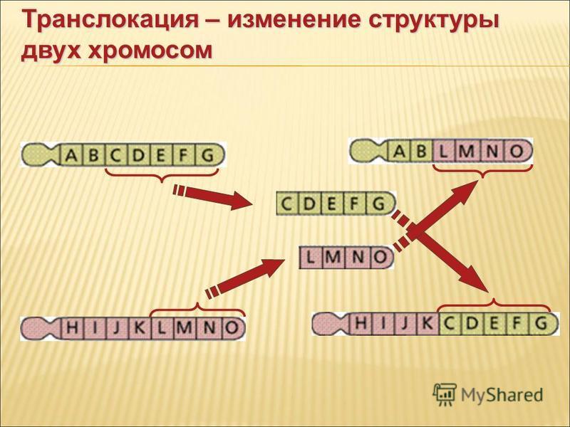 Транслокация – изменение структуры двух хромосом