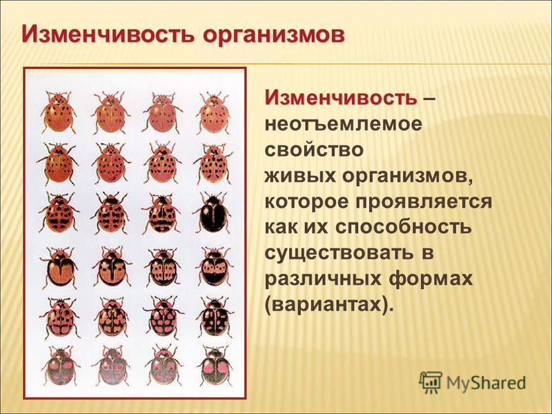 Изменчивость Изменчивость – неотъемлемое свойство живых организмов, которое проявляется как их способность существовать в различных формах (вариантах). Изменчивость организмов