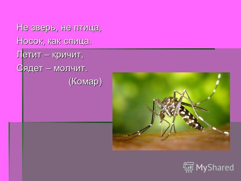 Не зверь, не птица, Носок, как спица. Летит – кричит, Сядет – молчит. (Комар) (Комар)