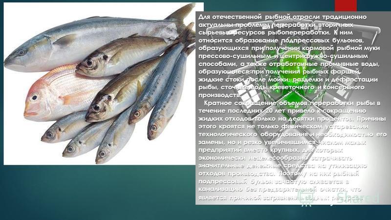 Для отечественной рыбной отрасли традиционно актуальны проблемы переработки вторичных сырьевых ресурсов рыбопереработки. К ним относится образование подпрессовых бульонов, образующихся при получении кормовой рыбной муки прессово-сушильным и центрифуж