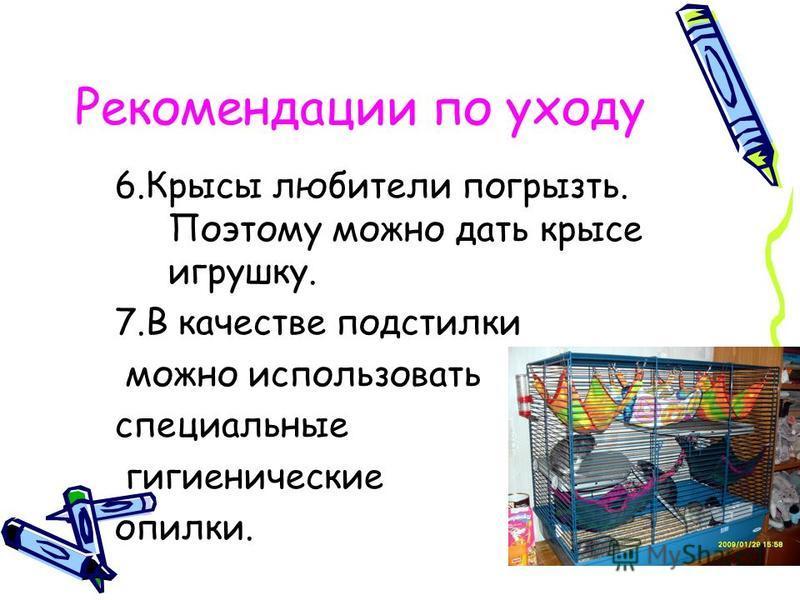 Рекомендации по уходу 6. Крысы любители погрызть. Поэтому можно дать крысе игрушку. 7. В качестве подстилки можно использовать специальные гигиенические опилки.