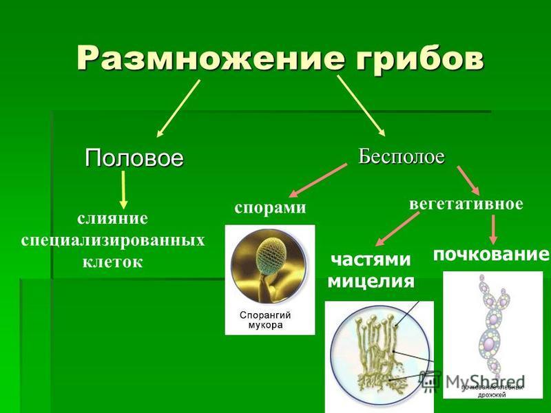 Чаи против паразитов в организме