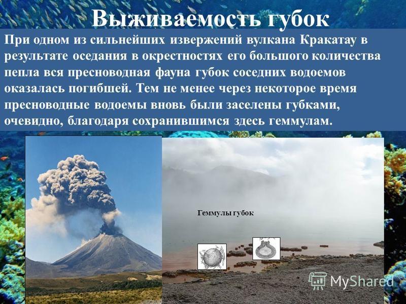 При одном из сильнейших извержений вулкана Кракатау в результате оседания в окрестностях его большого количества пепла вся пресноводная фауна губок соседних водоемов оказалась погибшей. Тем не менее через некоторое время пресноводные водоемы вновь бы