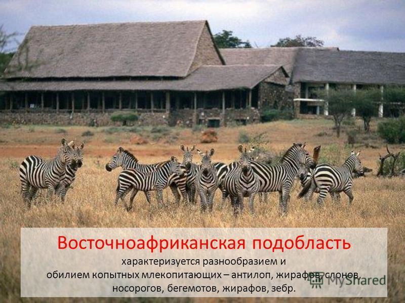 Восточноафриканская подобласть характеризуется разнообразием и обилием копытных млекопитающих – антилоп, жирафов, слонов, носорогов, бегемотов, жирафов, зебр.