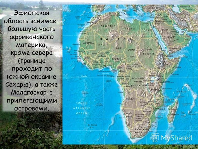 Эфиопская область занимает большую часть африканского материка, кроме севера (граница проходит по южной окраине Сахары), а также Мадагаскар с прилегающими островами.