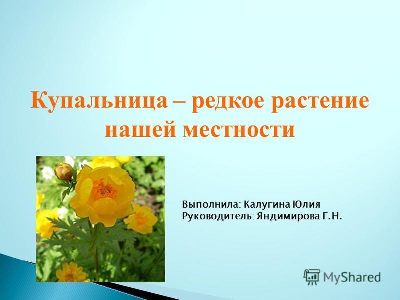 Купальница – редкое растение нашей местности Выполнила: Калугина Юлия Руководитель: Яндимирова Г.Н.