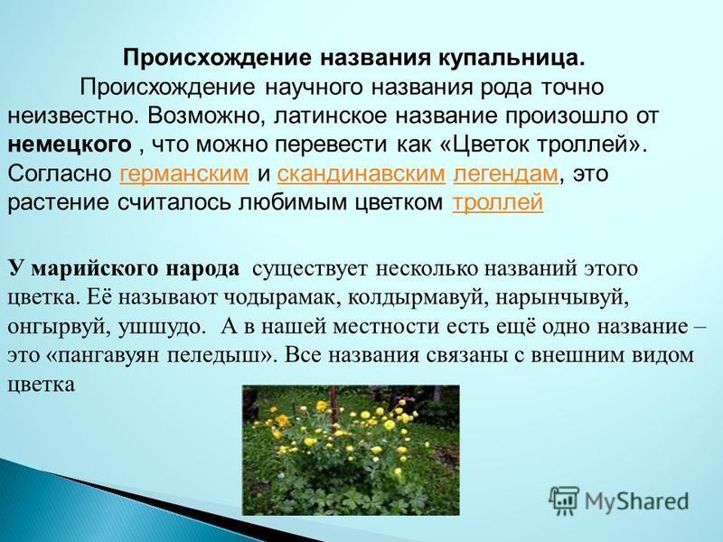 Происхождение названия купальница. Происхождение научного названия рода точно неизвестно. Возможно, латинское название произошло от немецкого, что можно перевести как «Цветок троллей». Согласно германским и скандинавским легендам, это растение считал