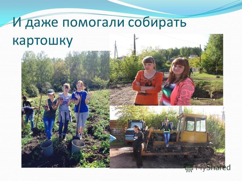 И даже помогали собирать картошку