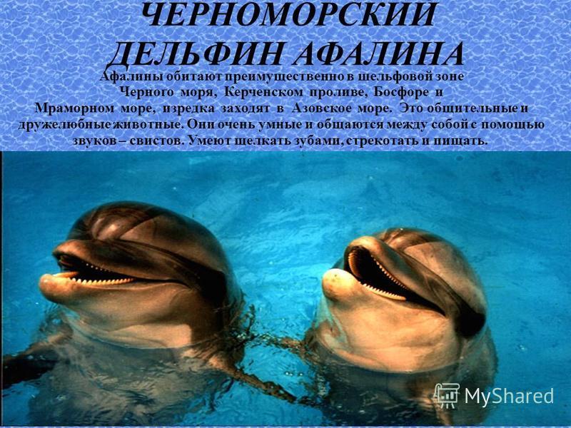 ЧЕРНОМОРСКИЙ ДЕЛЬФИН АФАЛИНА Афалины обитают преимущественно в шельфовой зоне Черного моря, Керченском проливе, Босфоре и Мраморном море, изредка заходят в Азовское море. Это общительные и дружелюбные животные. Они очень умные и общаются между собой