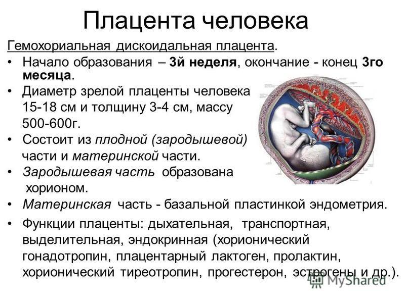 Плацента человека Гемохориальная дискоидальная плацента. Начало образования – 3 й неделя, окончание - конец 3 го месяца. Диаметр зрелой плаценты человека 15-18 см и толщину 3-4 см, массу 500-600 г. Состоит из плодной (зародышевой) части и материнской