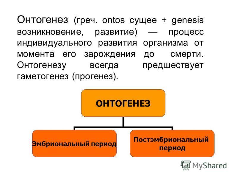 Онтогенез (греч. ontos сущее + genesis возникновение, развитие) процесс индивидуального развития организма от момента его зарождения до смерти. Онтогенезу всегда предшествует гаметогенез (прогенез). ОНТОГЕНЕЗ Эмбриональный период Постэмбриональный пе