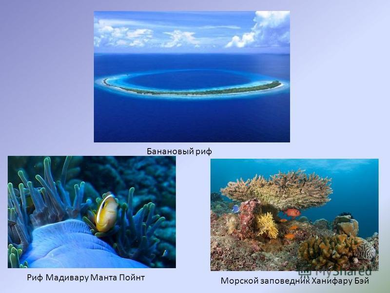 Банановый риф Риф Мадивару Манта Пойнт Морской заповедник Ханифару Бэй
